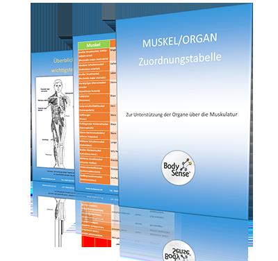 Muskel-Organ Zuordnungstabelle3- Landing-400x376