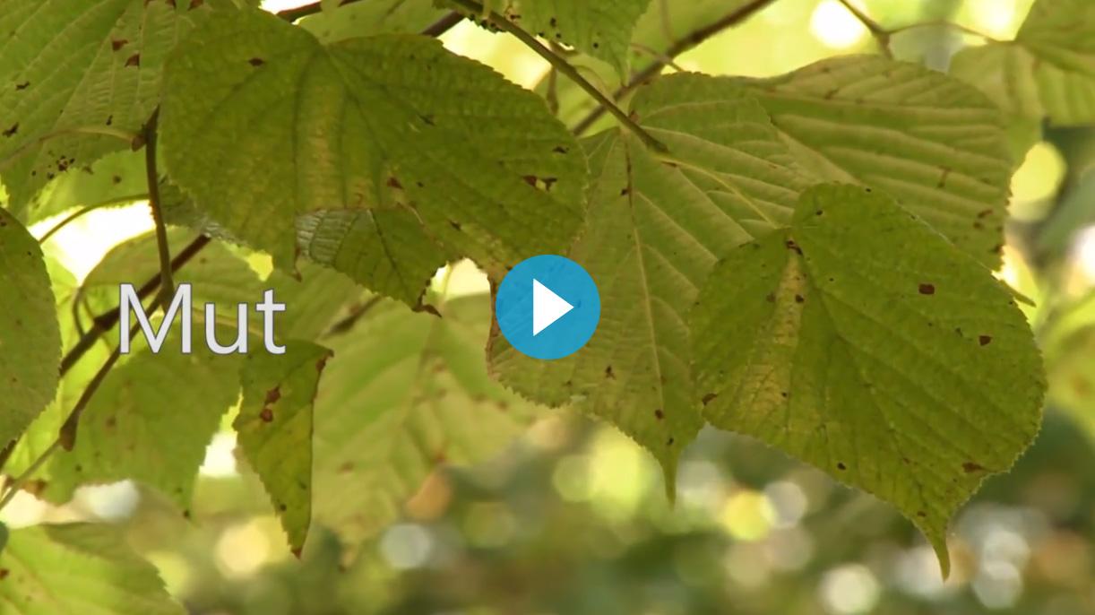 Videobild Holz2